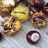 Семена ореха черного, каштана конского, клен татарский, Новосибирск