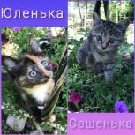 Котята в добрые руки, Новосибирск