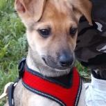 Домашний щенок, Новосибирск