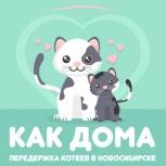 Передержка для кошек, в том числе для уличных, Новосибирск