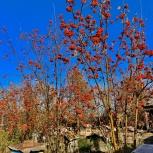 Мед Цветочный, Луговое Разнотравье, Новосибирск