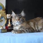 Котенок, настоящая домашняя рысь, Новосибирск