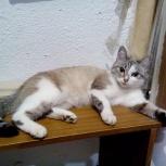 Найдена кошка, Новосибирск