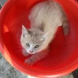 отдам котенка, Новосибирск
