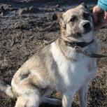 Потрясающая собачка Маруся в добрые руки, Новосибирск