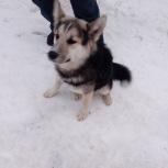 Нашли собаку в районе дк Родина г Бердск! Хозяева, найдитесь!, Новосибирск
