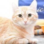 Молоденькая рыжая красавица кошка Фанта в добрые руки., Новосибирск