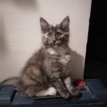 Кошечка ищет новых хозяев, Новосибирск
