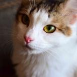 Ласковый котик Барсик в самые добрые руки, Новосибирск