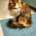 Нашлась кошка, Новосибирск