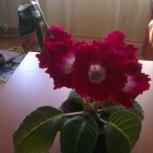 Продам цветы, Новосибирск