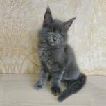 Мейн кун мальчик по имени Кайф!, Новосибирск
