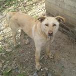 Найден пес, Новосибирск