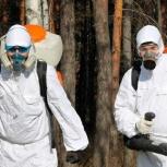 Уничтожение клопов тараканов муравьев гарантия !, Новосибирск