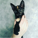 Котенок девочка - постоянный источник счастья, Новосибирск