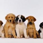 Корм для собак Acari Ciar, Новосибирск