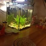 Продам аквариум 40 литров, Новосибирск