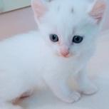 Котёнок Эльф, Новосибирск