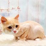 Котобанда. Стрижка кошек от 1,5 мм до 1 см. Более 200 отзывов, Новосибирск