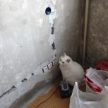 помощь в ремонте, Новосибирск