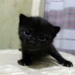 Милые котята ищут хозяина, Новосибирск