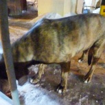 Найден пес- центр, Новосибирск