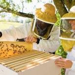 Пчелиный инвентарь пчеловода, Новосибирск
