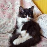 Котик  3,5 месяца, Новосибирск