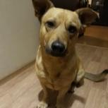 Найдена собака в пос. Краснообск (ВАСХНиЛ), Новосибирск