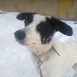 Мила, щенок 6 месяцев стерилизованная, Новосибирск