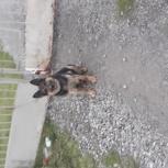 Нашлась собака, Новосибирск