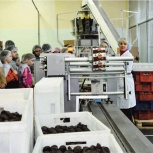 Экскурсия детям на шоколадную фабрику в Новосибирске, Новосибирск