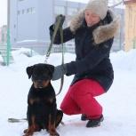 Дрессировка собак. Выгул. Выезд на дом. Консультации, Новосибирск