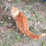Очень рыжая кошка - Кошка-Осень, Новосибирск