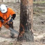 Спил деревьев, выкарчевка пней, Новосибирск