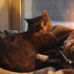 Щекастый кот ищет хозяина, Новосибирск
