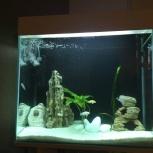 Продам аквариум со всем содержимым, Новосибирск