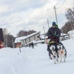 Катание на собачьей упряжке, Новосибирск