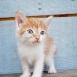 Рыжие котята в хорошие руки, Новосибирск