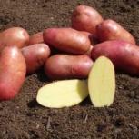 Продам картошку, Новосибирск