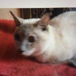Кошку в дар стерилизованная, привитая, приученная, Новосибирск