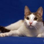 Молодой котик Малыш ищет семью, Новосибирск