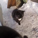 Кошечки для дома, Новосибирск