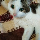 Особенный котик ищет семью, Новосибирск