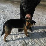 В Первомайском районе найден пёс, Новосибирск