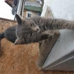 Котёнок в добрые руки, Новосибирск
