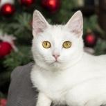 Котенок Долька счастья  7 месяцев,стерилизованная, Новосибирск