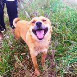 Молодой пес Рыжик, Новосибирск