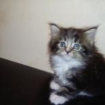 Милые котята, Новосибирск