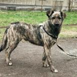 пес Юджин в добрые руки, Новосибирск